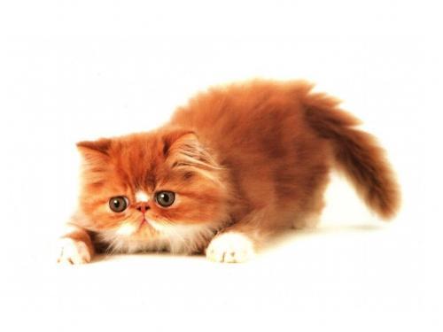 Имя котенку