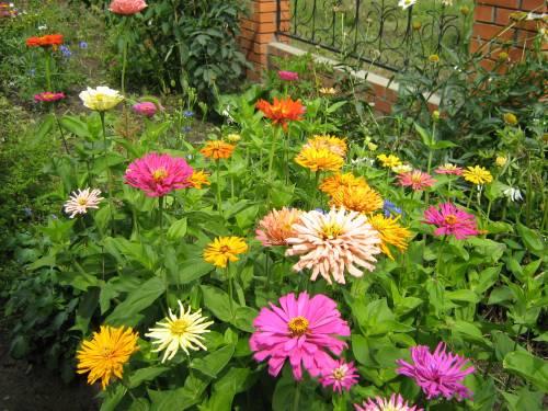 основы садоводства для любителей