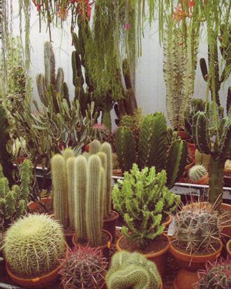 Виды кактусов - определение видов.